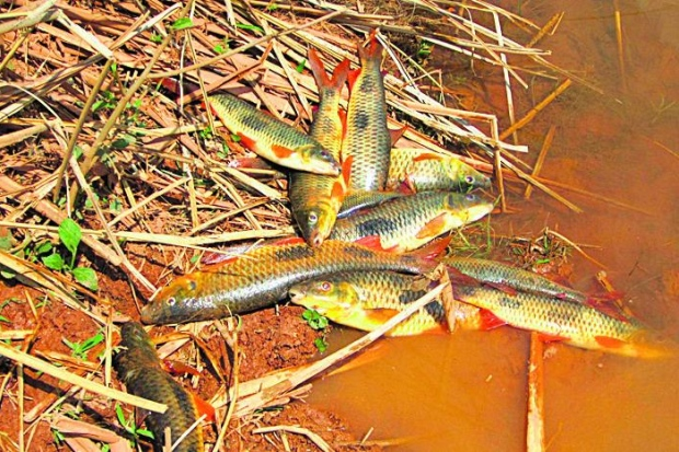 Efeito. Testes com o mineroduto teriam matado peixes no córrego Passa Sete; Ibama não apurou caso