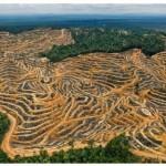 amazonia-desmatamento-destruic3a7c3a3o1